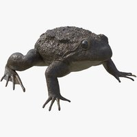 3D frog rigged animates