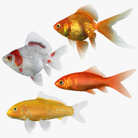 3D model goldfish 2 fish