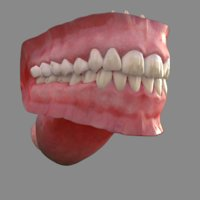 3D human mouth