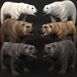 3D grizzly bear black polar model