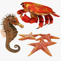 3D crab sea star horse