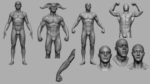3D male anatomy head v2