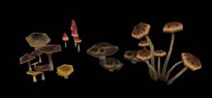 painted mushrooms 3D model