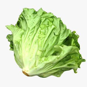 salad head lettuce 3D model
