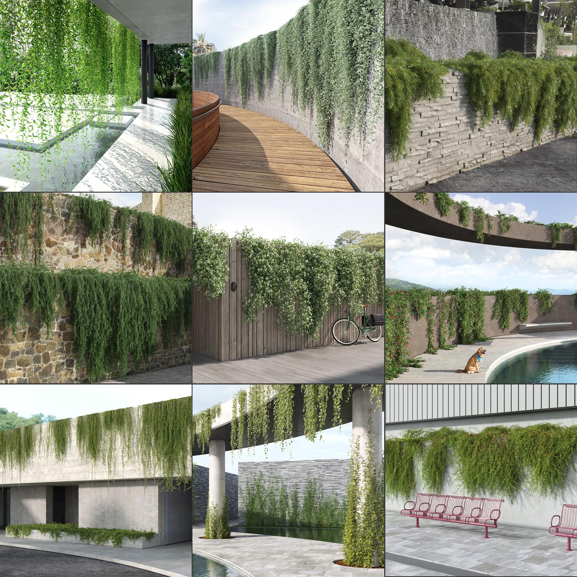 creeper plants 3D model