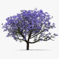 3D blooming jacaranda tree model