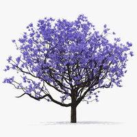 blooming jacaranda tree leaves 3D model