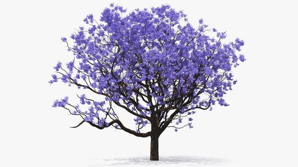 Blooming Jacaranda Tree Leaves 3d Model Turbosquid