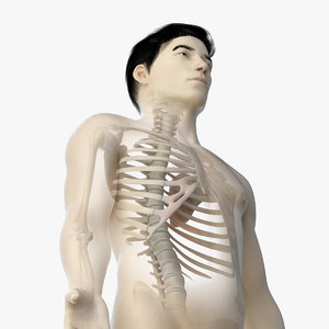 skin asian male skeleton 3D