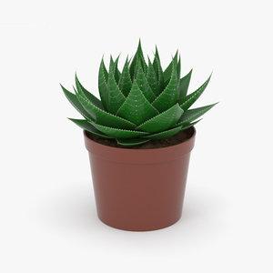 3D model aloe succulents plant