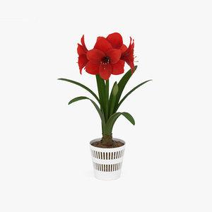 amaryllis flowers plant 3D model