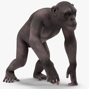 chimpanzee dark pan rigged model