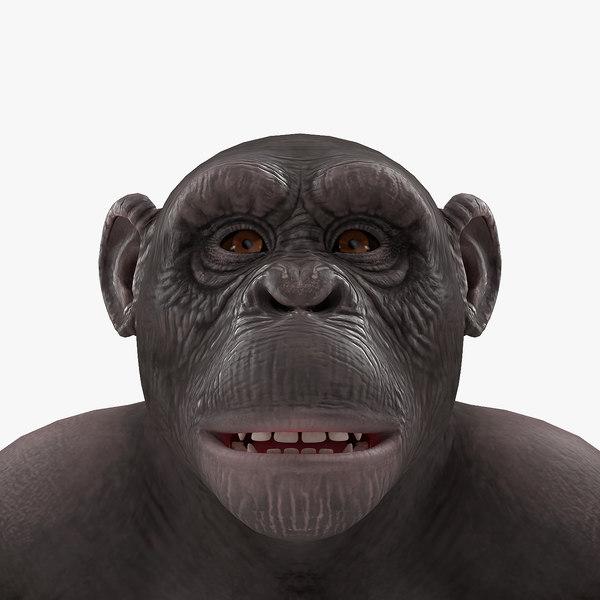 chimpanzee dark pan rigged 3D model