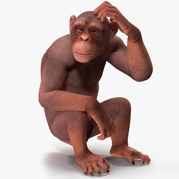 light chimpanzee rigged 3D model