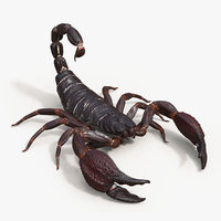 Scorpion Rigged