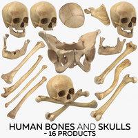 human bones skulls - 3D model