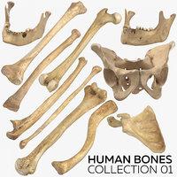 3D human bones 01