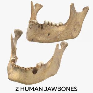 2 human jawbones 3D model