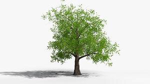 3D tree 001 model
