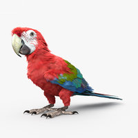 red-and-green macaw green model