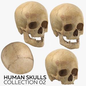 human skulls 02 3D