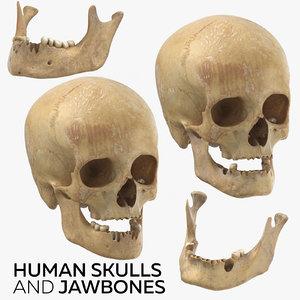 3D human skulls jawbones
