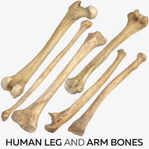 human leg arm bones model