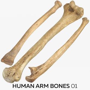3D human arm bones 01