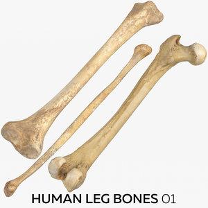 human leg bones 01 model