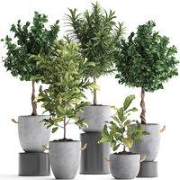 houseplants exotic plants tree 3D model