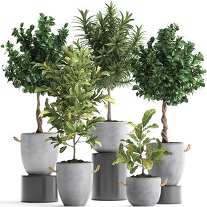 houseplants exotic plants tree 3D model