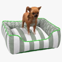 Chihuahua in Dog Bed with Fur