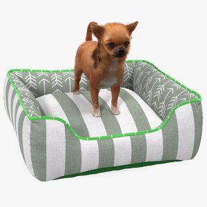 3D chihuahua dog bed fur model