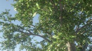 3D tree animation model