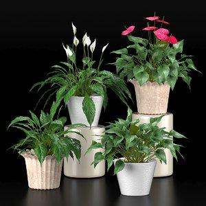 plants spathiphyllum anthurium 3D model