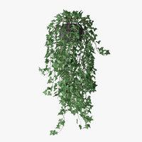 Ivy in pot 11