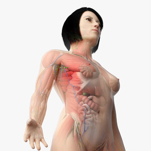 3D asian female anatomy rigged model