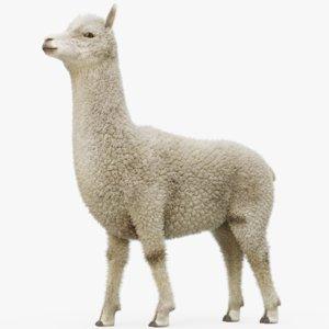 3D alpaca animal model