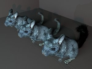 3D chinchilla rodent mammals model