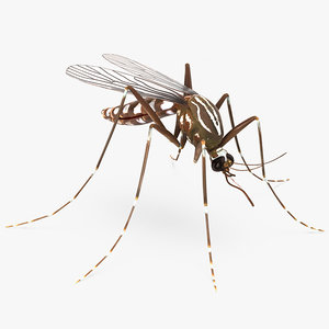 3D mosquito rigged