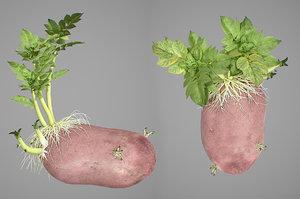 3D photorealistic potatoes