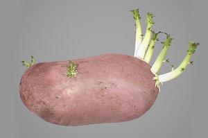 photorealistic potatoes 3D model