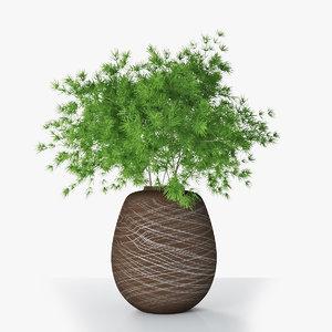 asparagus umbellatus vase 3D
