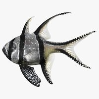 banggai cardinalfish scanline 3D model