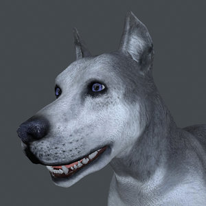 rigged male dog 3D model
