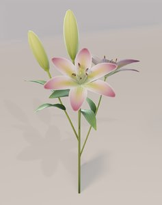 3D lily model