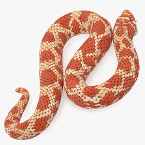 albino hognose snake rigged 3D model