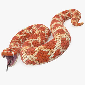 albino hognose snake rigged 3D