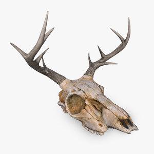 3D deer skull model