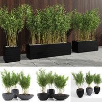 bamboo plants fargesia murielae model